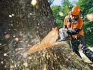 Можно ли удалять деревья на кладбище самому и к кому обратиться