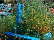 Методы эффективного уничтожения травыи кустов накладбище