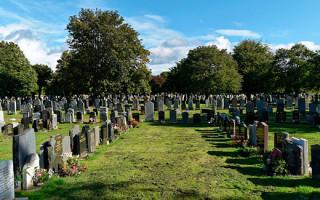 Какие деревья подходят для посадки на кладбище
