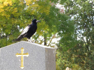 Какие приметы нужно соблюдать на похоронах