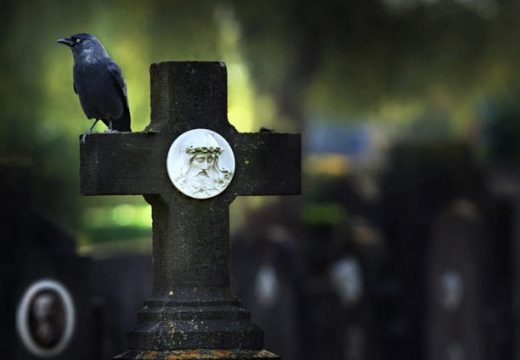 ворон на кладбище
