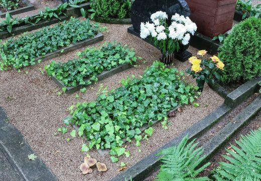 грибы на могиле