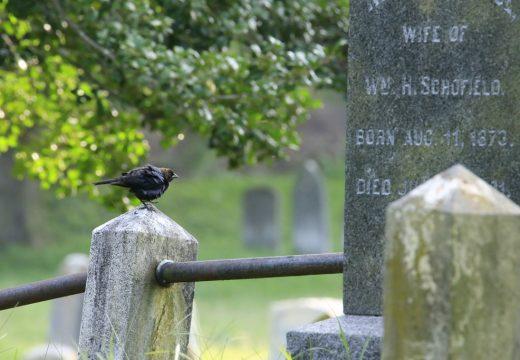 птица на памятнике