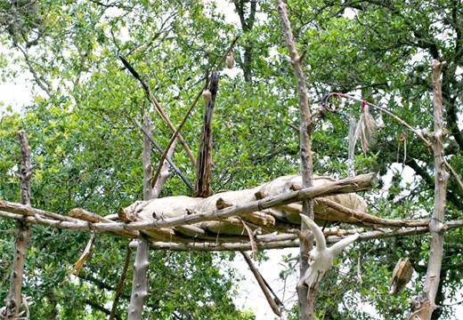 деревья и ритуал погребения