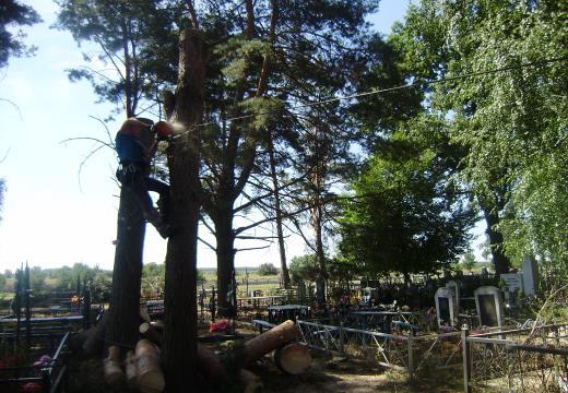 деревья над могилами