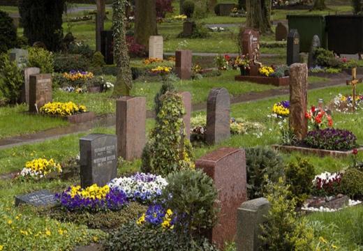 травы и кусты на могиле