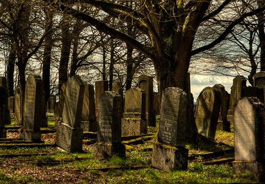 Деревья на кладбище