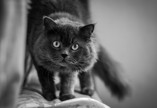 испуганный кот