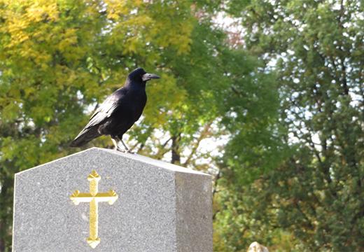 ворона на памятнике