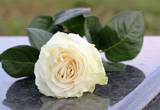роза на надгробной плите