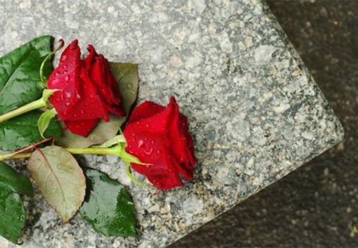 две розы на плите