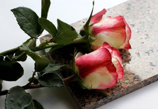 две розы на граните