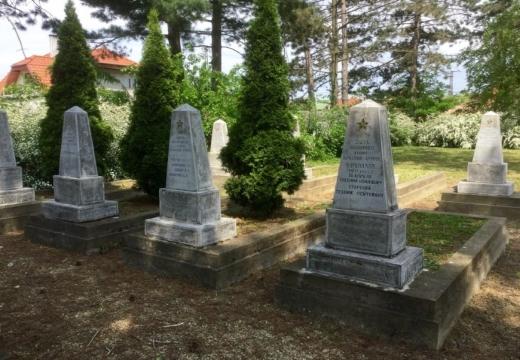 Туя на кладбище