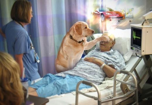 умирающий дедушка собака